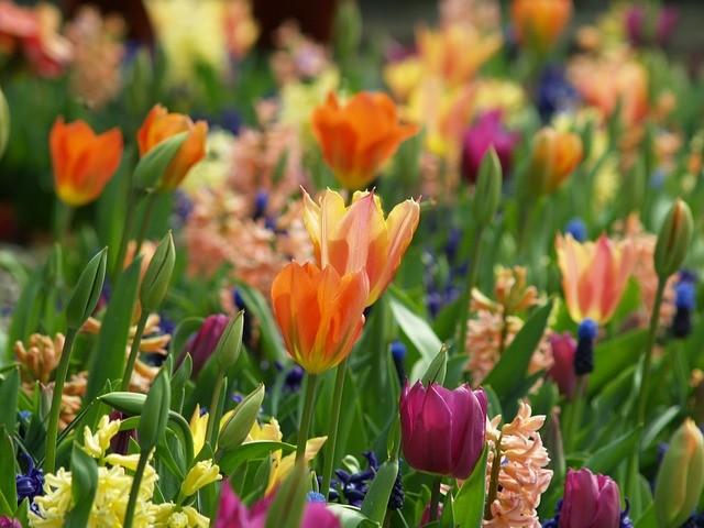 flowers-753134_640